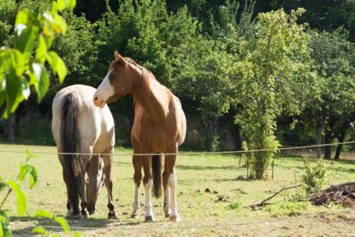 307 und nebenan die Pferde