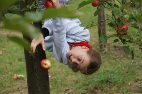 5 Schwerkrafttest auf Apfelfest
