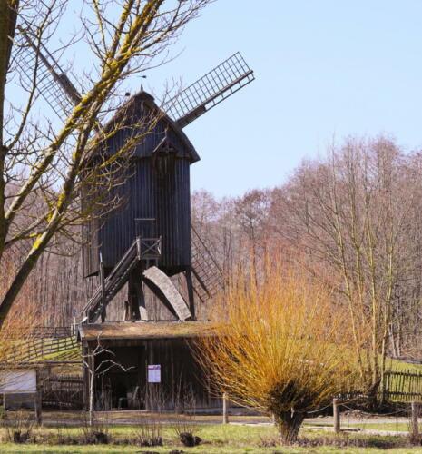 Mühle mit Weide