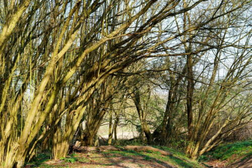 Vorfrühling im Vilbeler Wald