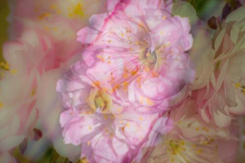 Rosa Träumchen